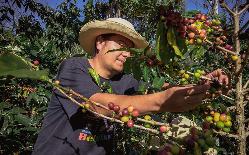 Agricultor de café de especialidad en la finca Lasso Argote de Colombia